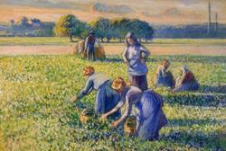 La cueillette de Pissarro – Héritiers Simon Bauer c. Bruce et Robbi Toll
